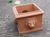 Terracottakrukke – Firkantet med løvehoved