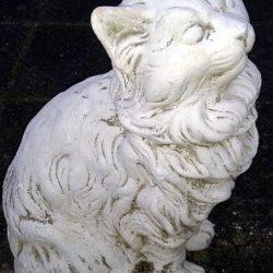Marmorkat