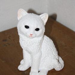 Hvid kattekilling