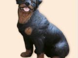 Dyr Rottweiler -naturtro – Resin