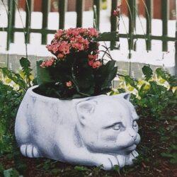 Kat til blomst